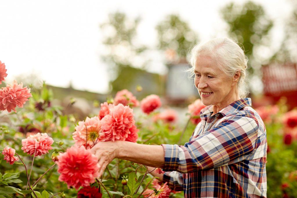 une femme sénior cultive son jardin